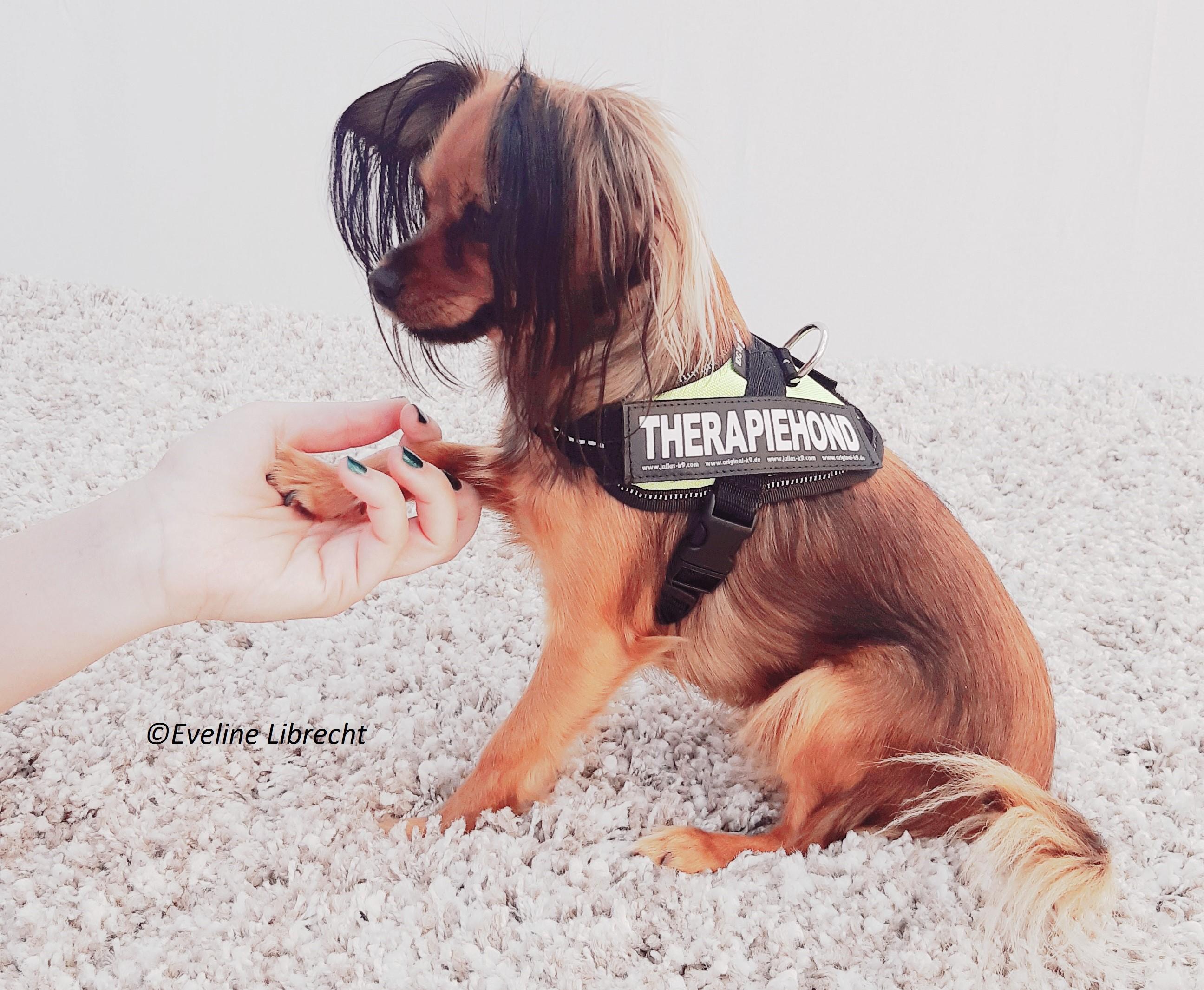 Therapiehond nanou, pootje, Dierenkracht